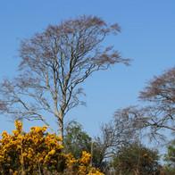 Our Broadleaf Forests