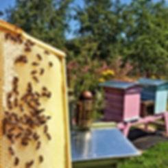 Fresh Local Dublin Honey frame in Airfield Estate