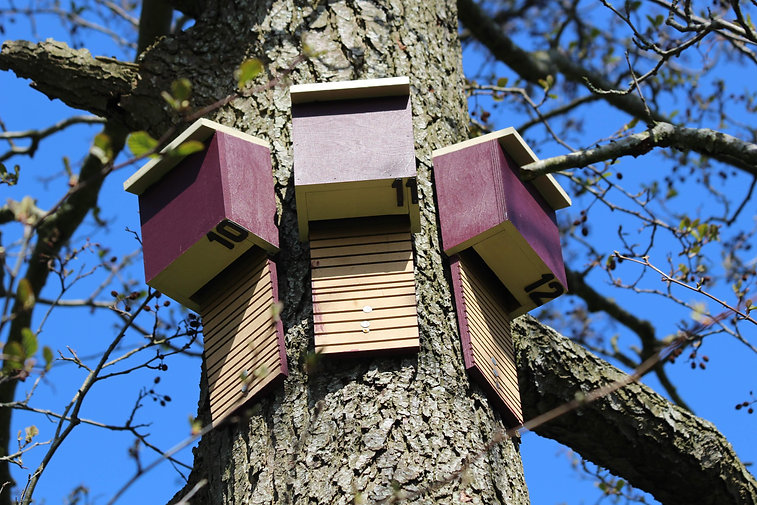 Bat Roosting Boxes