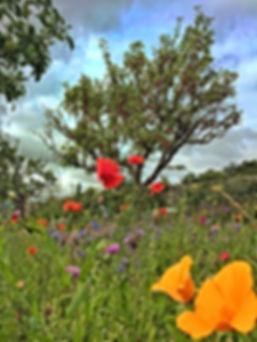 Wildflower Meadow in Airfield Estate