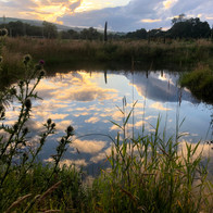 Our Wetlands