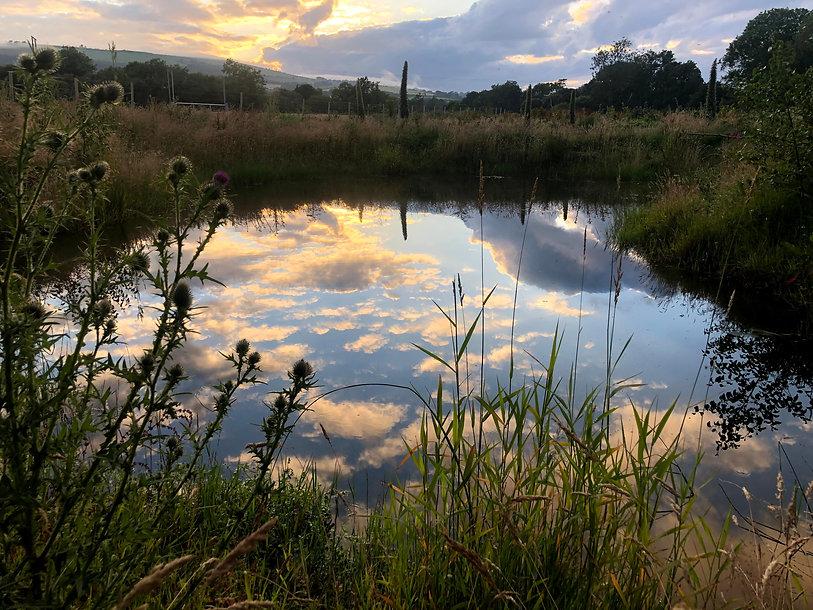 Wetland Habitat at Widacres