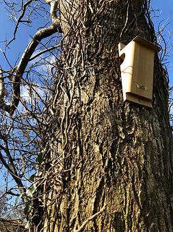 Treecreeper Nestbox