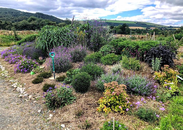 Pollinator flowerbed