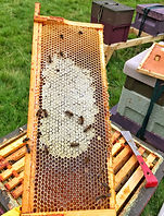 Partially Capped Frame of Heather Honey