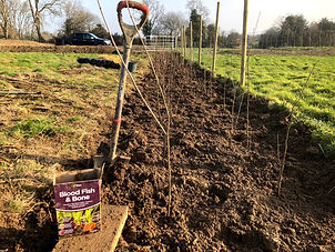 Planting new native hedgerow