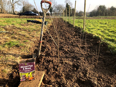 Native Hedgerow being planted at Wildacres