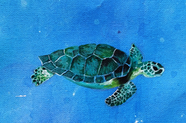 Sea Turtle Paint Sketch