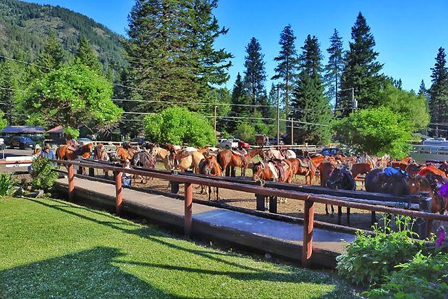 Pack Station Horses