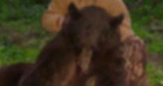 Bear pic #2.jpg
