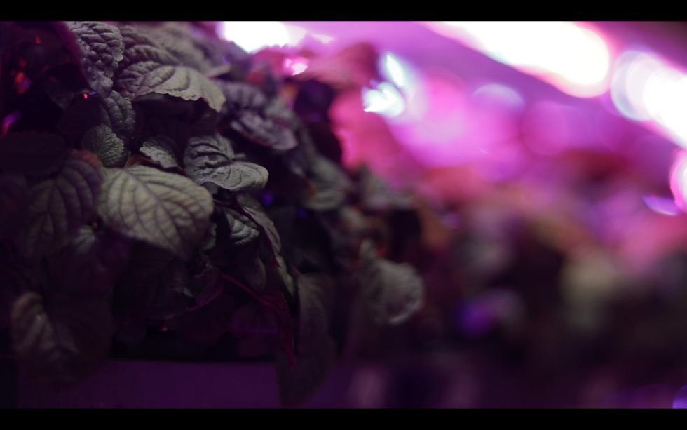 Screen Shot 2020-12-01 at 11.25.52 AM.pn