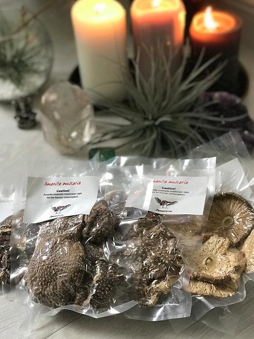 Dried Amanita Pantherina 15 g. (0.5 oz.)