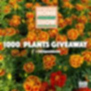 Flower post ad112_edited.jpg