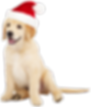 Cute_Dog_with_Santa_Hat_PNG_Clipart-542_