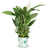 pngfind.com-house-plant-png-1687592(1).p