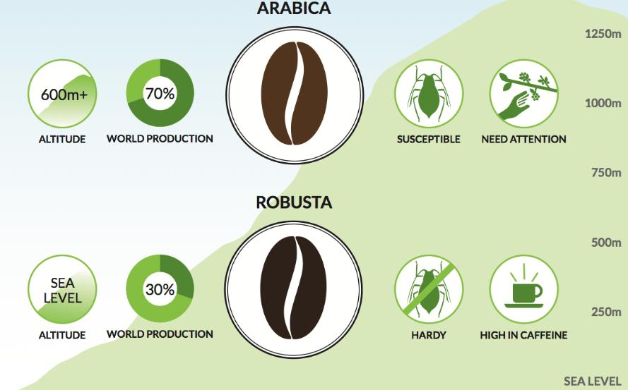 caffeine-amount-in-arabica-and-robusta