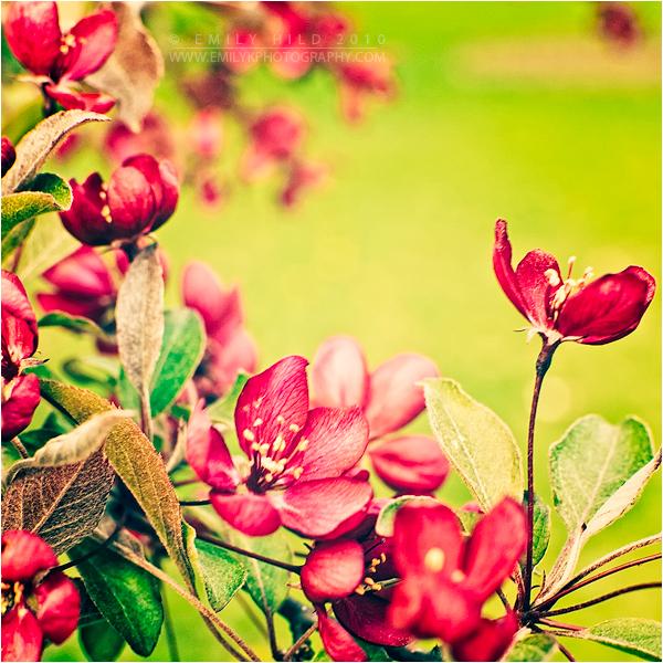 Blossom