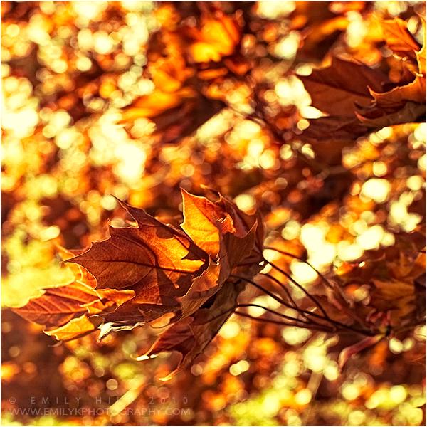 Fall Shimmer