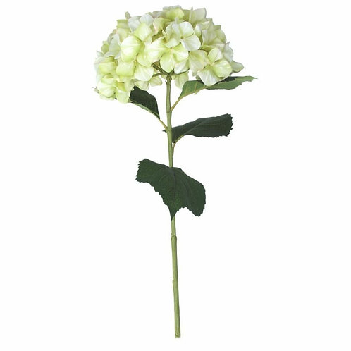 Hydrangea stem - pale green