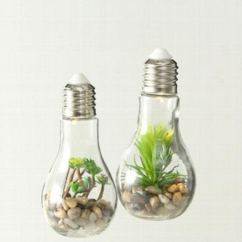 Succulent bulb lights