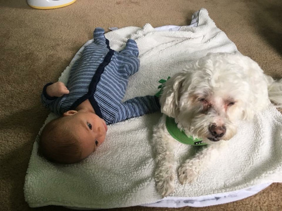 How My Dog Prepared Me For Motherhood