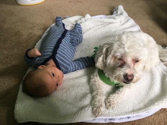 How My Dog Prepared Me For Motherhood
