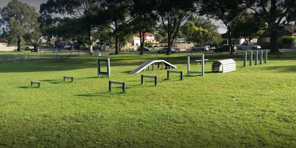 Lappie Play Date- Deakin Dog Park Silverwater