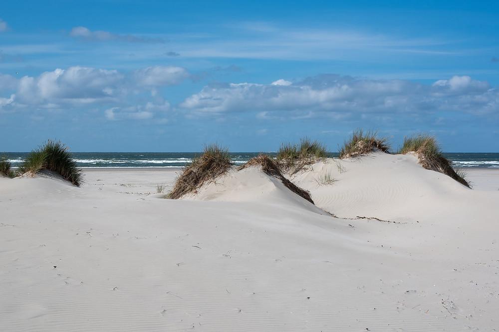 Sanddunes of the WaddenEilanden - the Netherlands