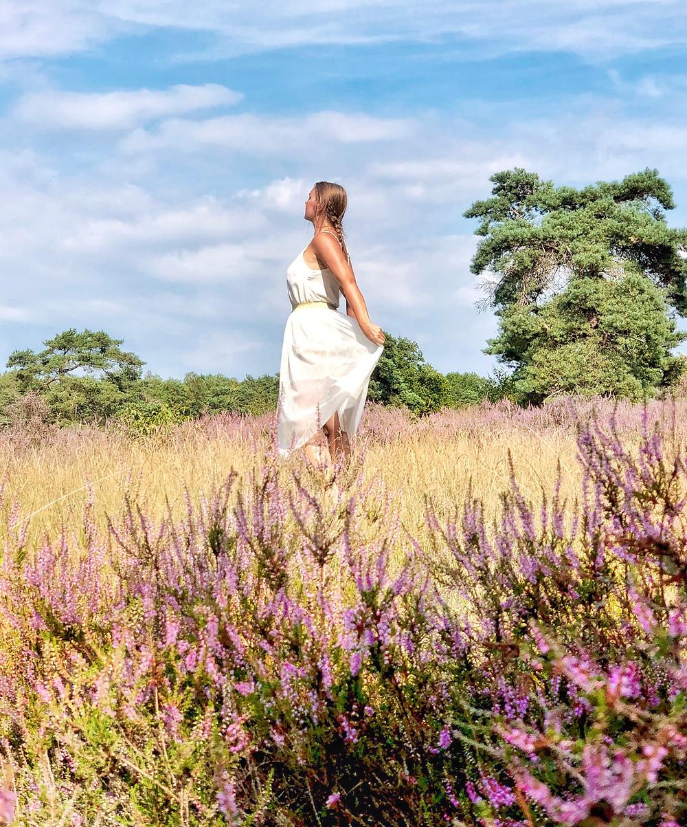 Blooming heather in Garderen-Netherlands