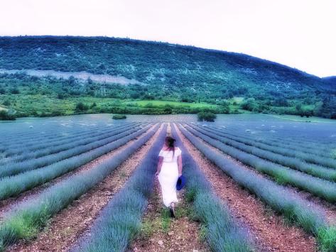 Ultimate France roadtrip – chasing castles, vineyards & lavender fields in Burgundy, Drôme &