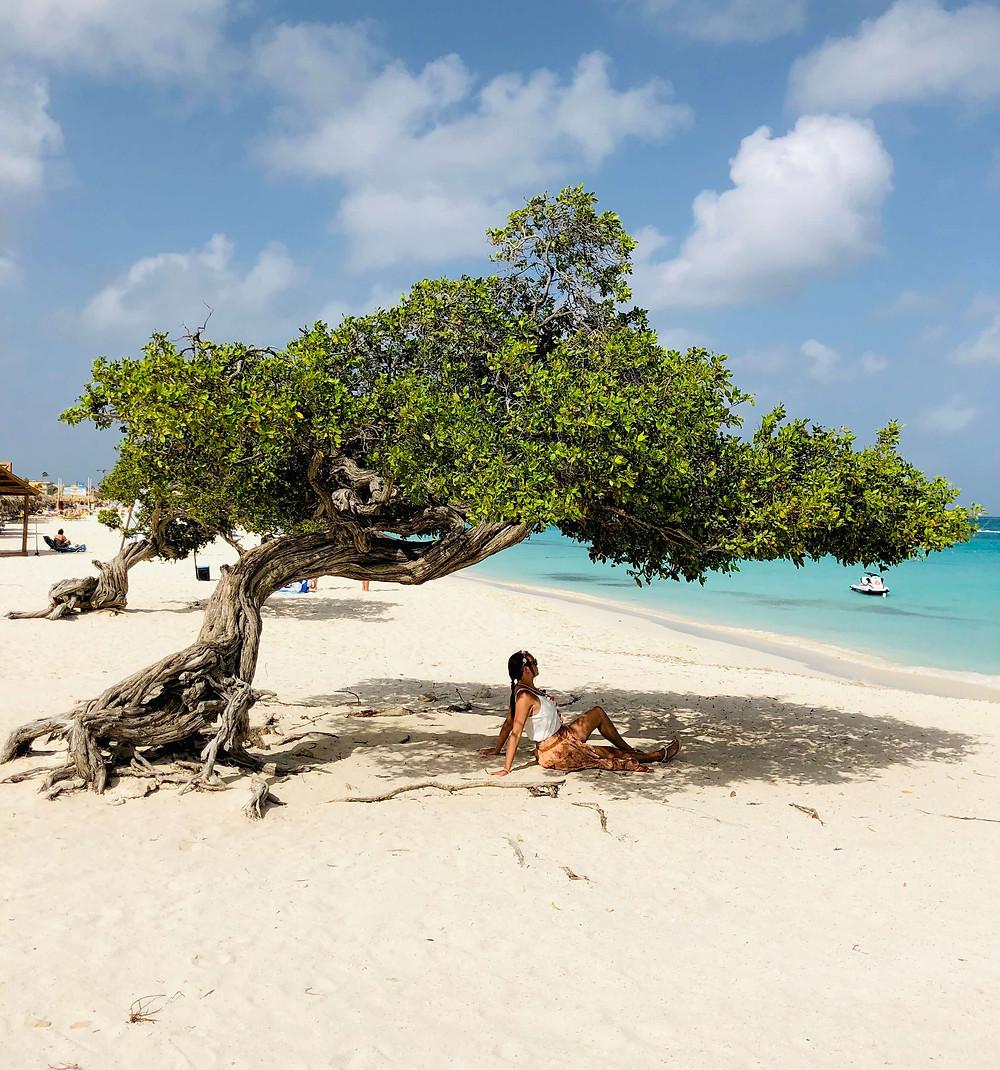 Aruba Fofoti tree