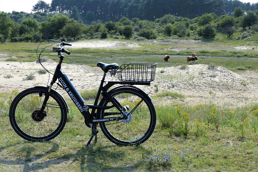 Cycling in National Park Zuid-Kennemerland-Velsen-Netherlands