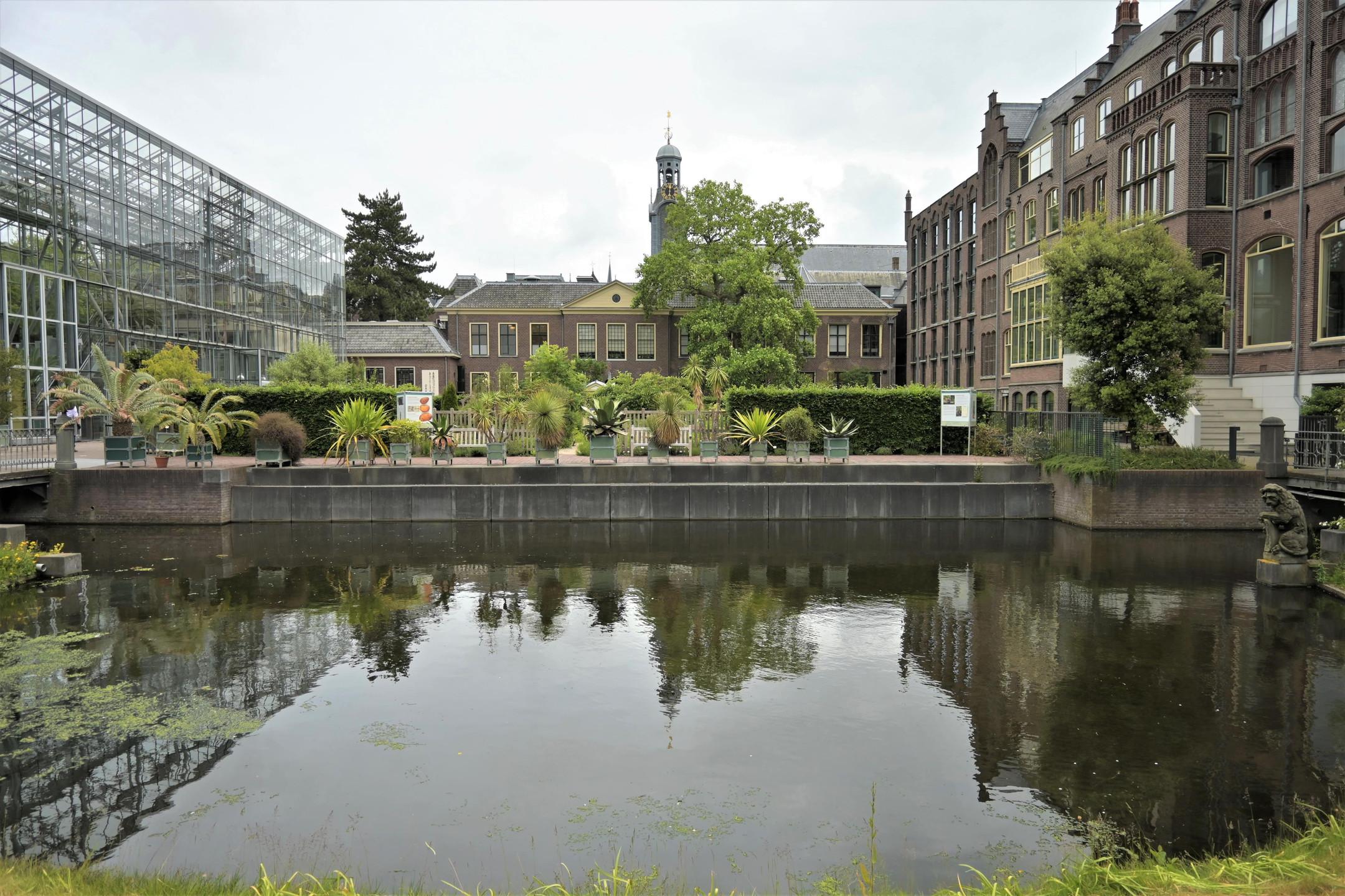 Hortus Botanicus Leiden Netherlands citytrip