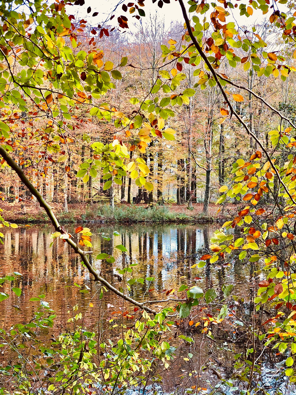 Autumn in Haagse Bos-The Hague Netherlands