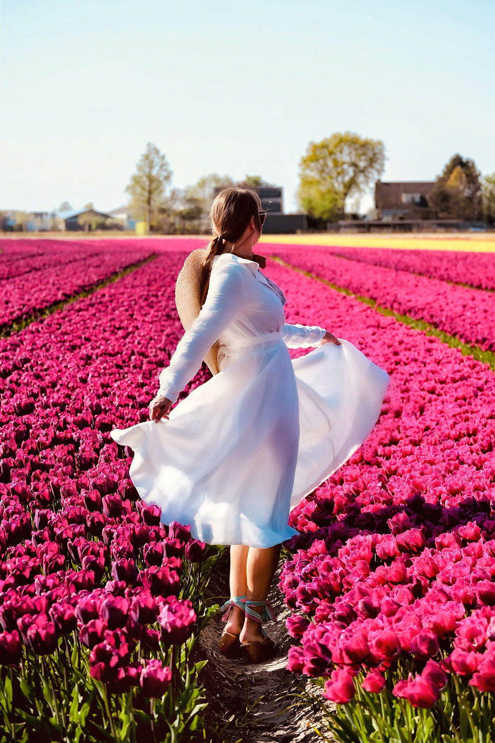 Tulip fields Voorhout, the Netherlands