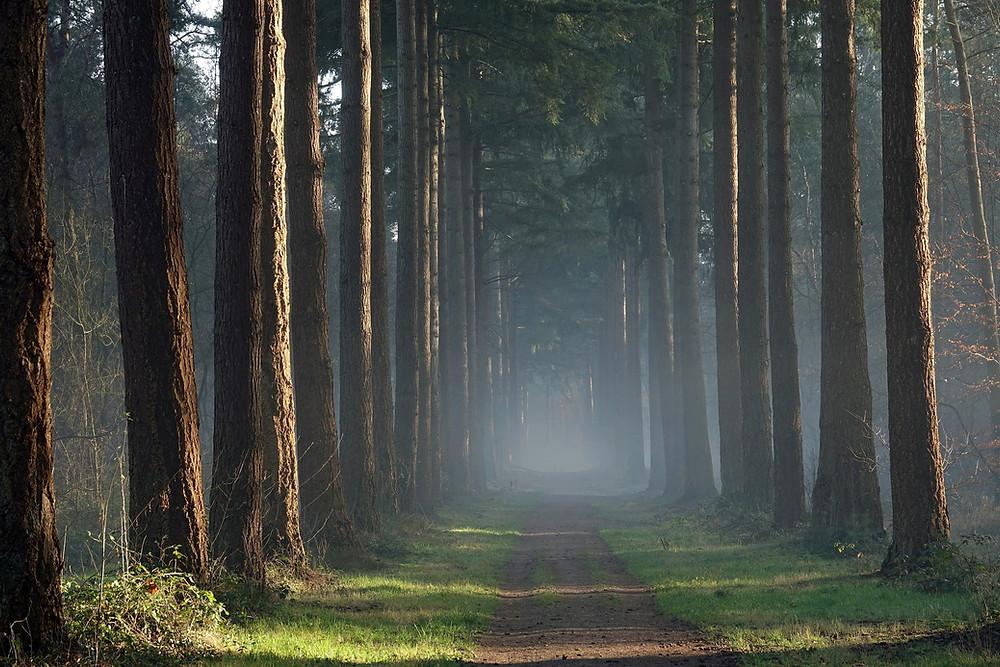 National Park de Hoge Veluwe - the Netherlands