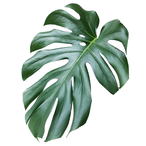 PLANT B.png