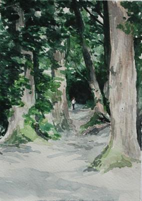 Thorncombe Woods, Dorset