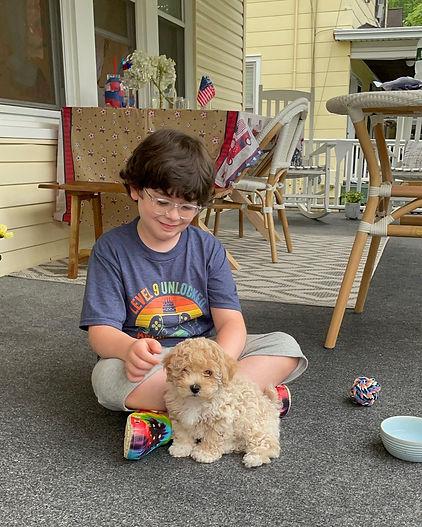 Poochon puppy play.jpg
