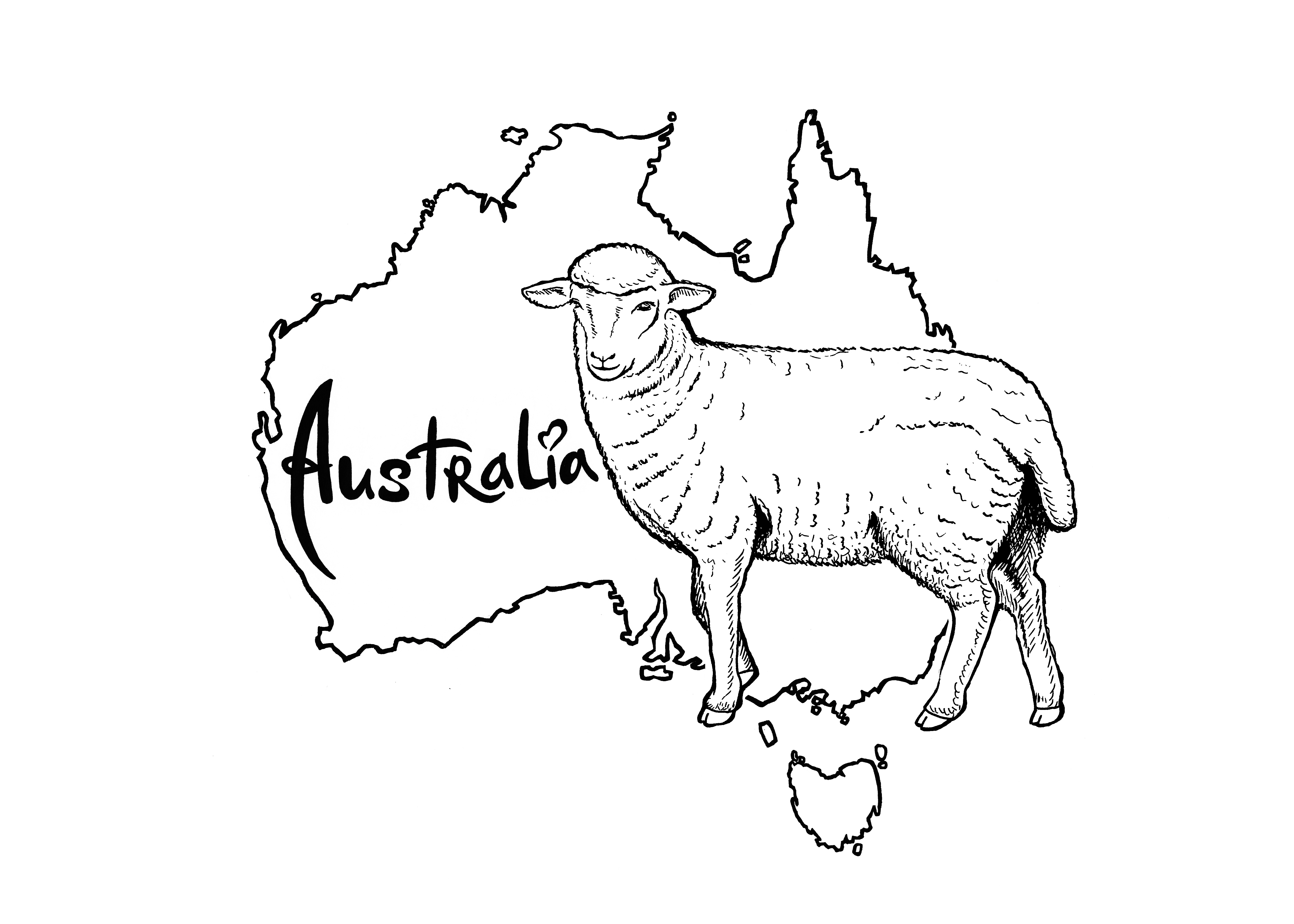 金羊手绘插画
