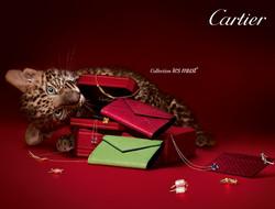 Home+Cartier+-+Patrick+Demarchelier