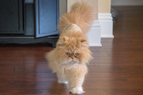 Post 2 - Kitty-Bobo5.jpg