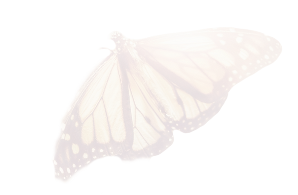 a%252520butterfly%252520leans%252520on%2