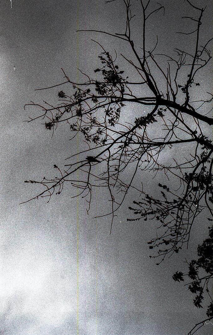 Seth Trouwborst, Untitled