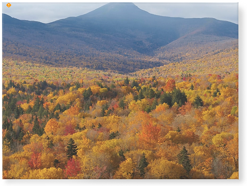 New Hampshire Fall - Wooden Canvas Print