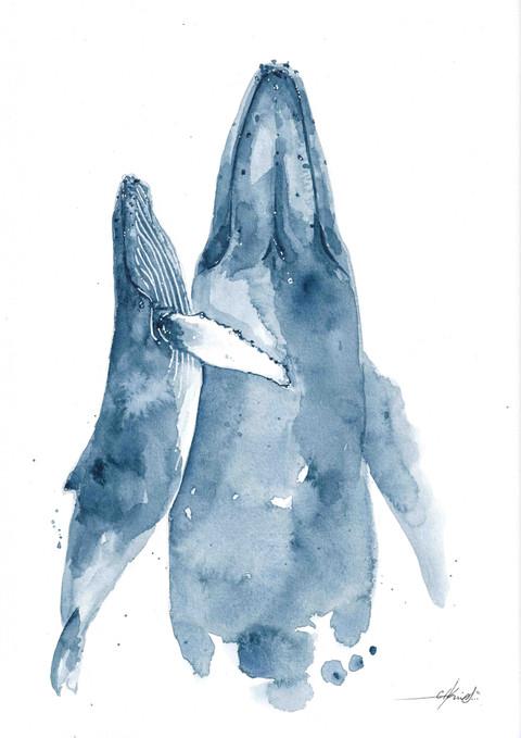 Indigo Blue Whales-2.jpg