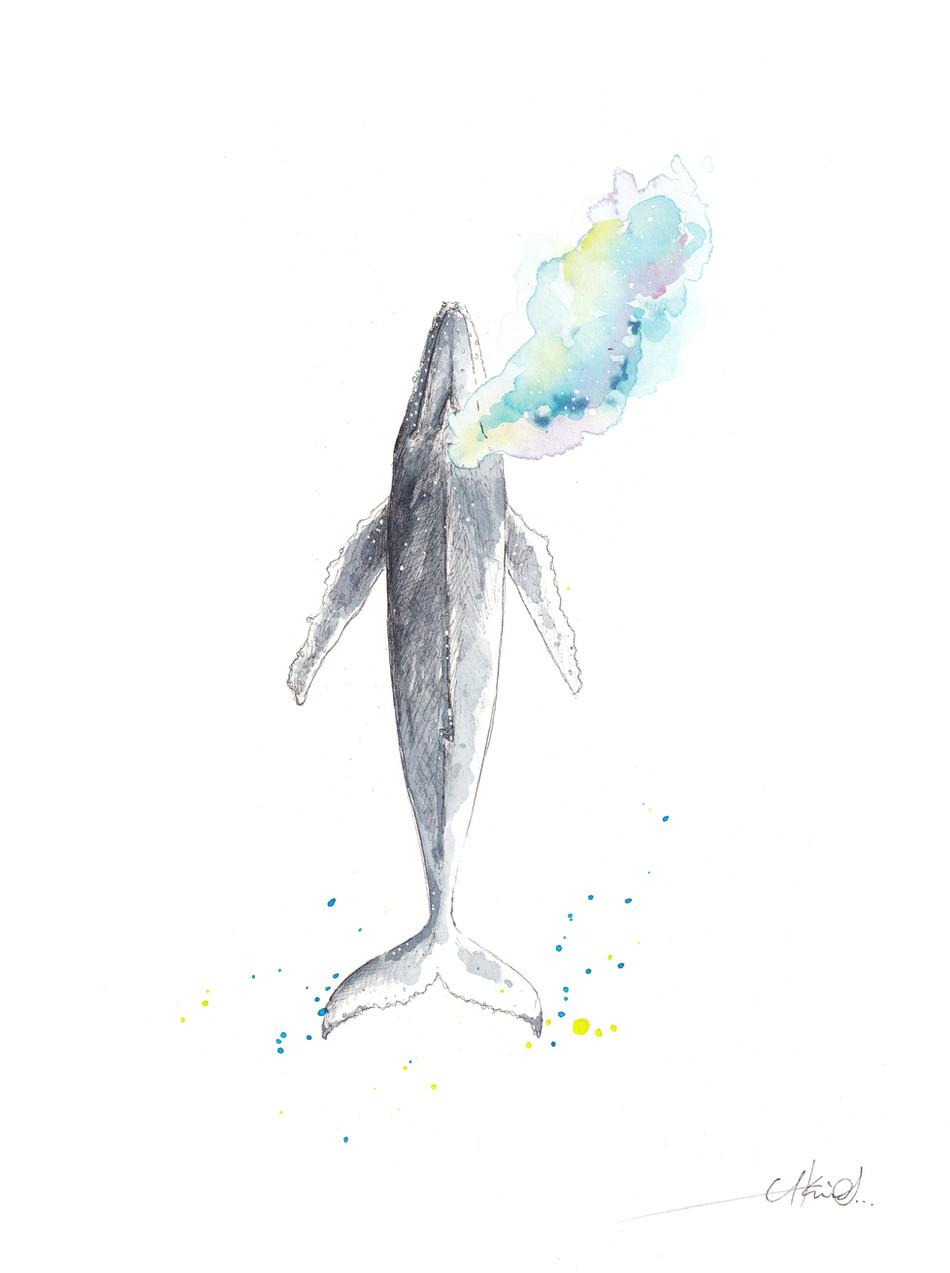 Whale RainBlow