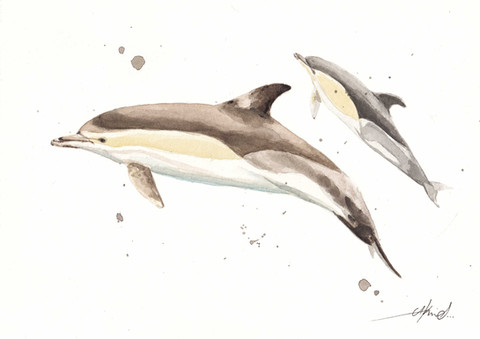 ShortBeakedCommonDolphins-3.jpg