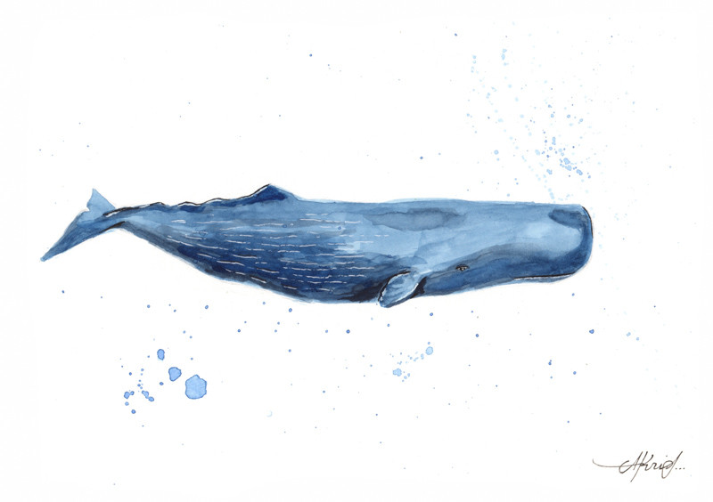 Cachalote Blue