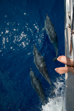 The dolphins and my feet